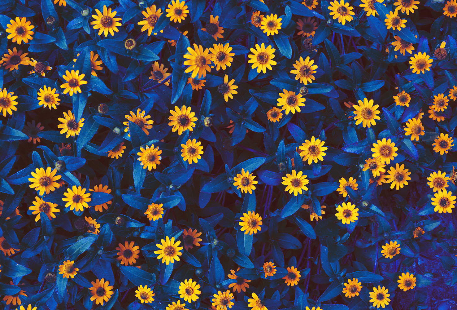 I-love-flowers
