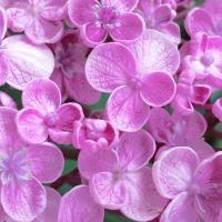 Barbies Flowers