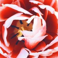 deepinsideaflower