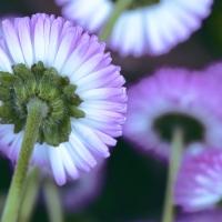 flower from below