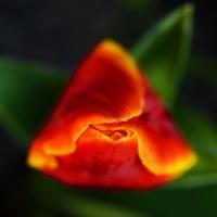 flowerinvasion