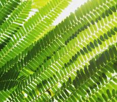 Gruene Blätter im Lichtspiel